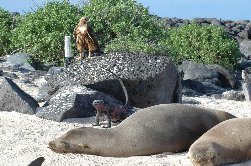 Fauna delle Isole Galapagos